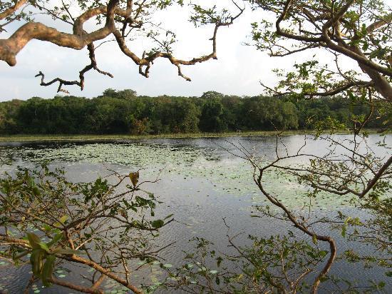 Wilpattu National Park : Wilpattu in the evening