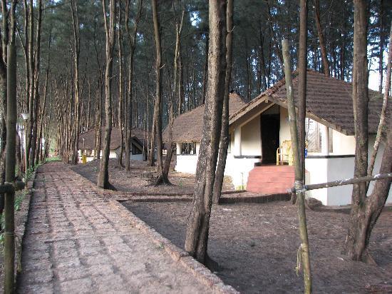 Mtdc Resort Tarkarli Huts