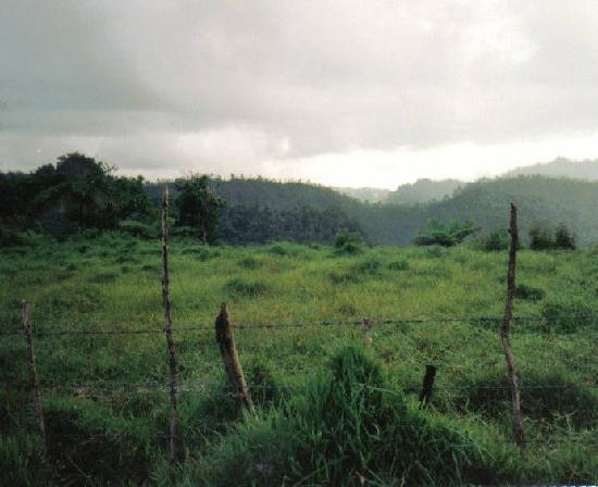 Samoan Countryside Upolu Island, Samoa