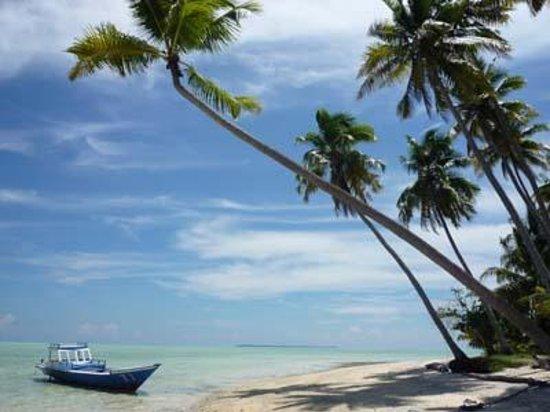 Maratua Atoll, Indonesia: Strand mit Palmen
