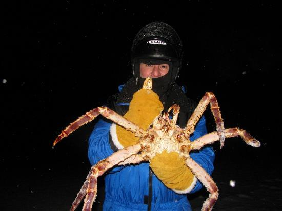 Kirkenes, Norway: King Crab!