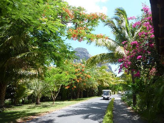 Paradis Beachcomber Golf Resort & Spa : Parkanlage des Hotels mit Golfwagen