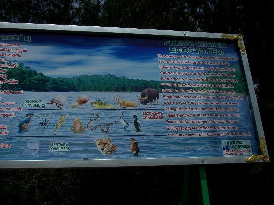 Berijam Lake: what you can find