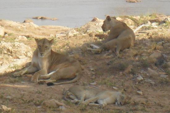 Kenyan House Boutique Hotel: safari