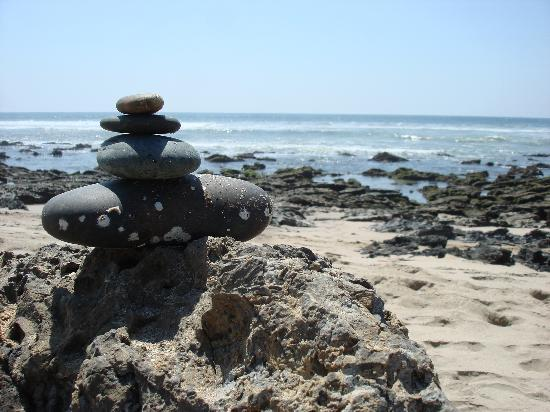 Casa de La Sirena : Fun finds on a beach walk! A little farther down there are beautiful tide pools too!