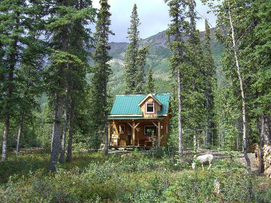 Wheaton River Wilderness Retreat: Das Cabin