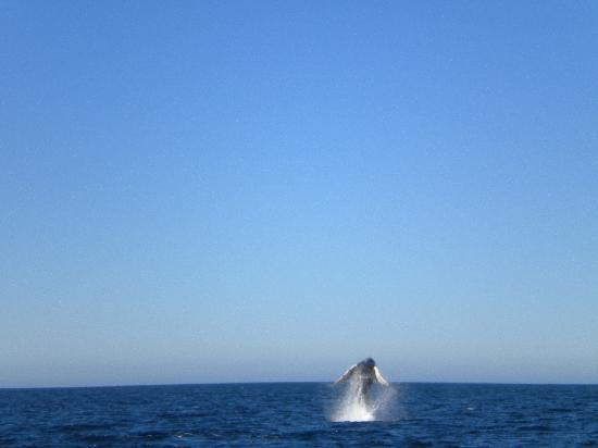 Pez Gato Cabo Sailing Catamarans : Whale!!