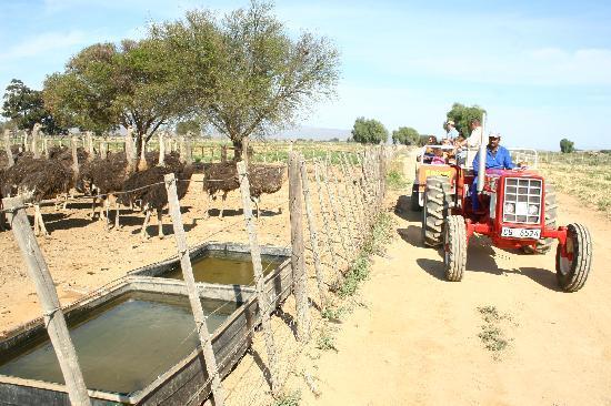 Safari Ostrich Show Farm : Having fun on the Tractor Tour #Safari Ostrich Farm