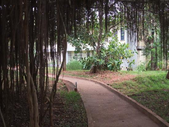 Auroville, India: la comunità veritè