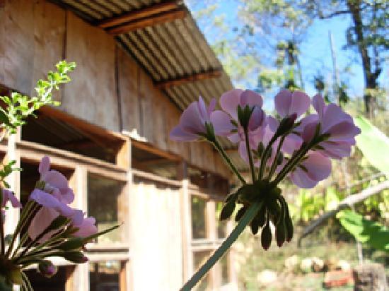 Armonia Ambiental Lodge
