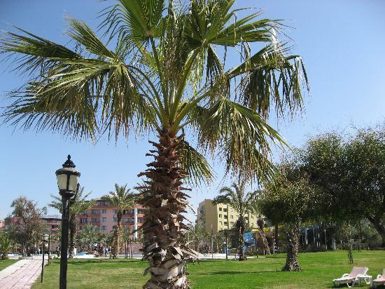 Kızılağaç, Türkiye: Selge Beach-Resort