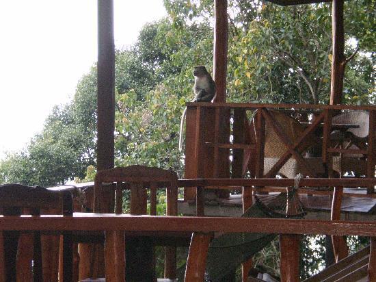 Lanta Marine Park View Resort: lots of wild monkeys there