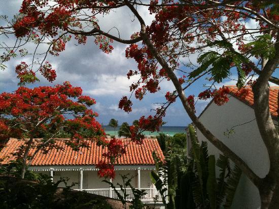 COMO Parrot Cay, Turks and Caicos: vista dalla terrazza del ristorante/colazioni
