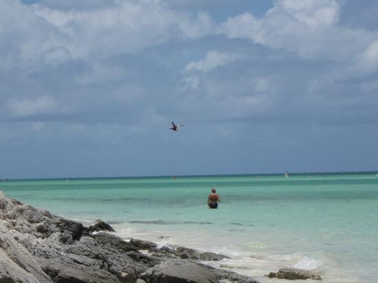 COMO Parrot Cay, Turks and Caicos: un pellicano a pesca