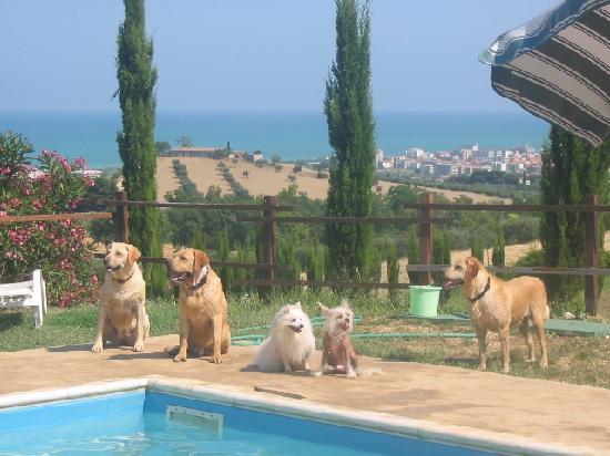 Gulliver : Piscina cani