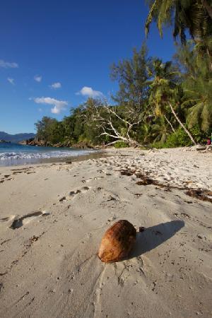 Anse Soleil Beachcomber : Sure la plage