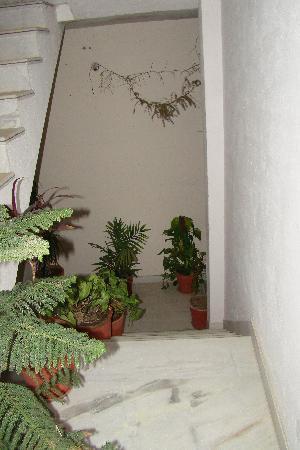 Udaipur Bed n Breakfast: stairway