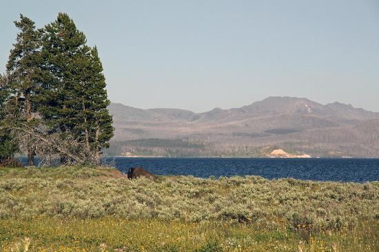 Lake Lodge Cabins: Bison by the lake