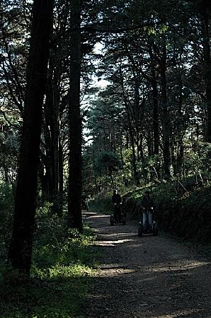 Silencetour Segway Nature Guided Tours: diverse scenery - magical woods