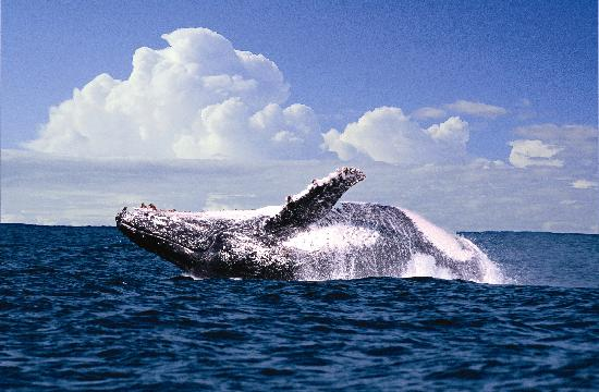 San Lameer Resort Hotel & Spa: Dolphins and Whale watching at the 4-star Peermont Mondazur at San Lameer, KwaZulu-Natal