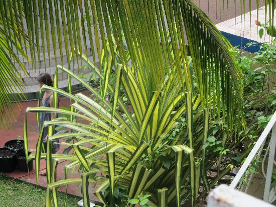 Rio Vista Resort: local plants