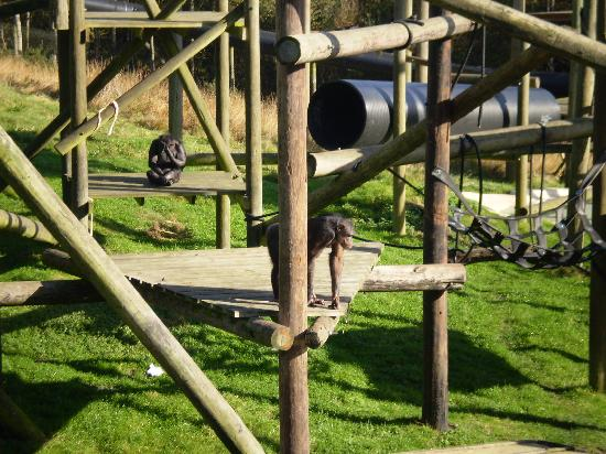 Monkey World: monkey's at play