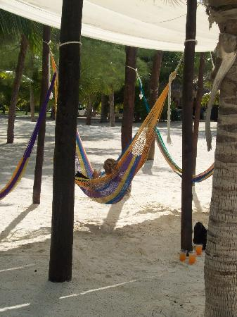 Isla de Pasion: Loved the hammocks - see the drinks in the bottom corner!