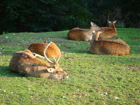 Wildpark Bruderhaus: Rotwild