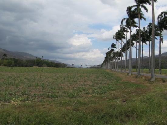 Jose Rafael Revenga, Venezuela: Chaguaramos de la Hacienda Santa Teresa