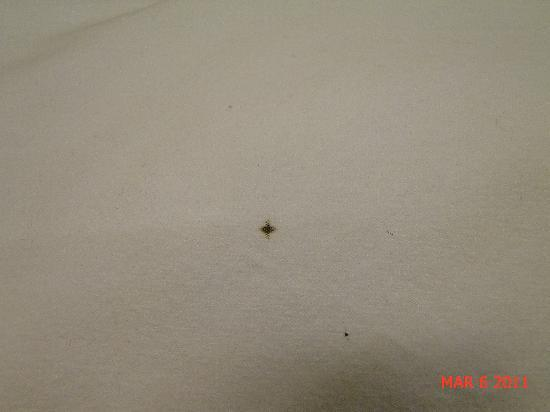 Friendship, โอไฮโอ: bed bug 'droppings' ie, poop! (it's true, check web)