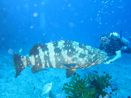 Eden Divers Khao Lak: Big fish, small diver...