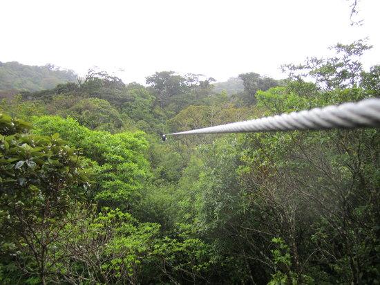 The Original Canopy Tour : LONG zipline cable