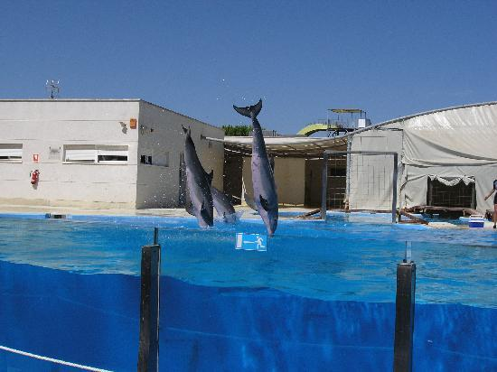 La Pineda, Spain: Dolphins' show