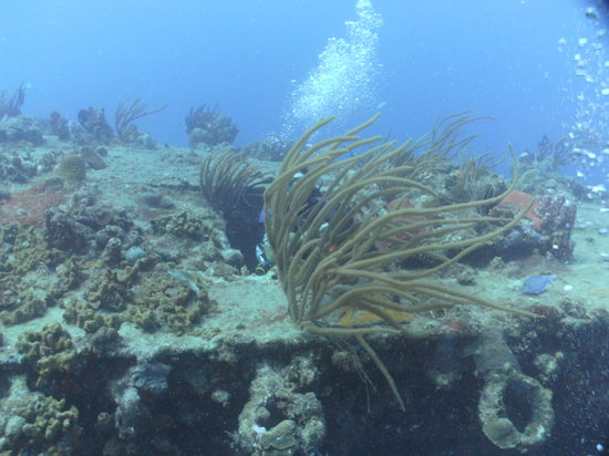Sail Caribbean Divers : Lots of growth on this old wreck