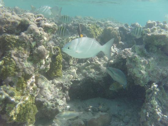 Grand Bahia Principe Tulum : off shore of the hotel