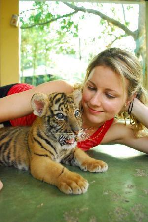 5 weeks old - Picture of Tiger Kingdom, Mae Rim - TripAdvisor