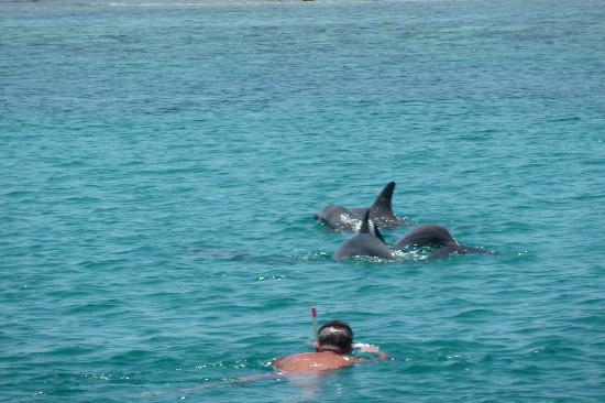 Ocean Village Club: Wasini, nage avec les dauphins
