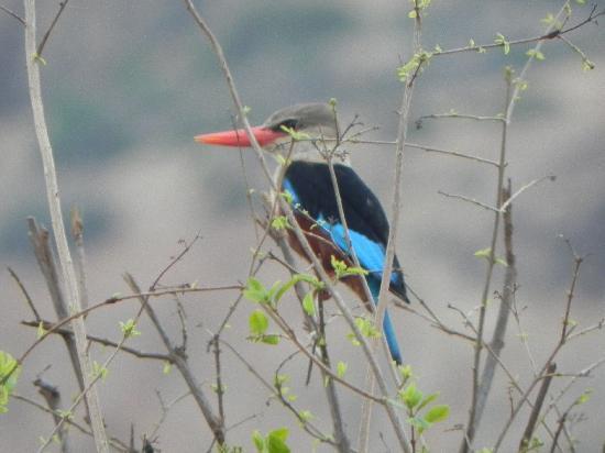 PrideInn Paradise Beach Resort: Local Bird