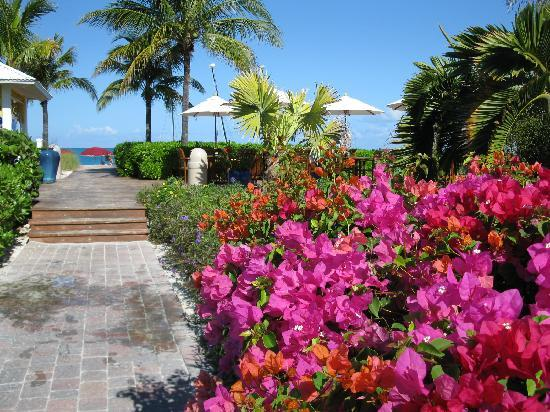 Royal West Indies Resort: Beach entrance