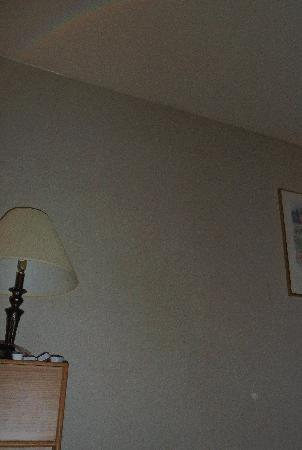 Cocusa Motel: orb