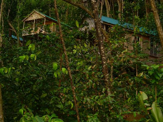 Jungle Bay, Dominica: Cottages perched in the hill