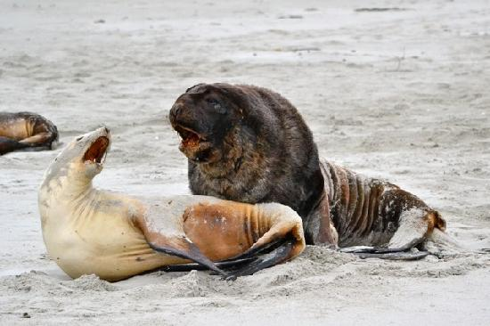 Elm Wildlife Tours: Sea Lions