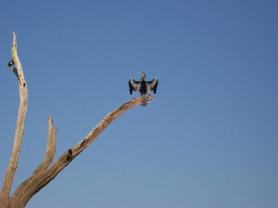 Periyar Tiger Reserve: Bird