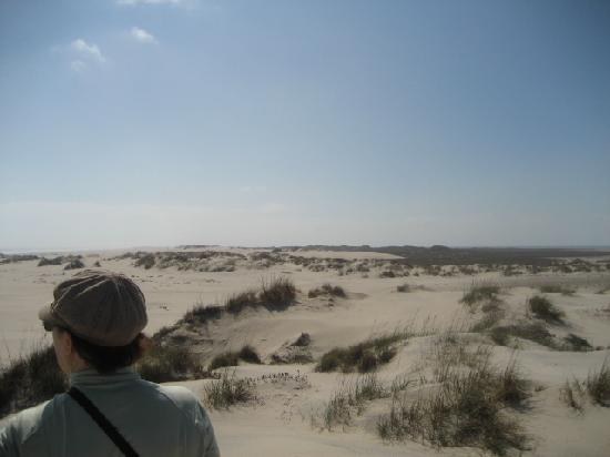 Isla Blanca Park : Dunes of north South Padre