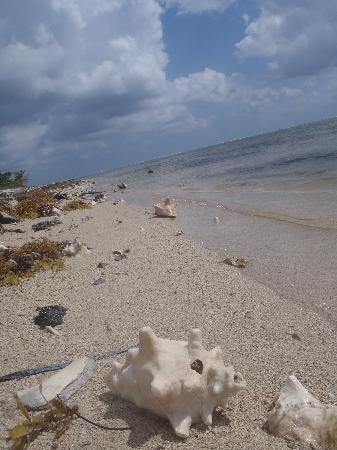 Casa de Suenos: private beach