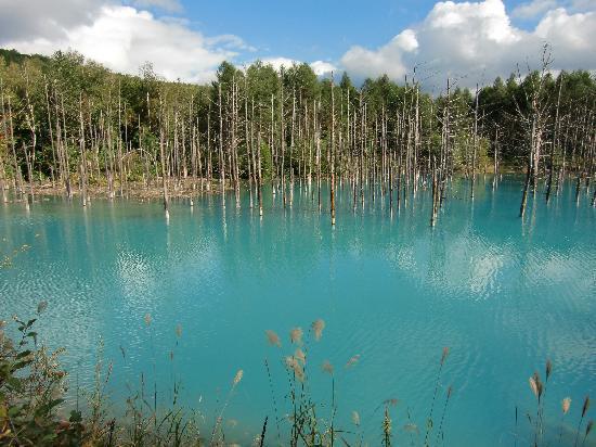 Biei-cho, Japon : 青い池