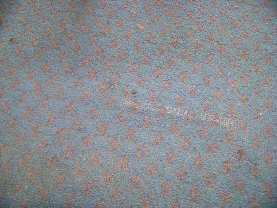 Club Hotel Tiberias: Carpet
