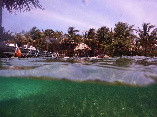 Off The Wall Dive Center & Resort: Snorkeling in frontyard