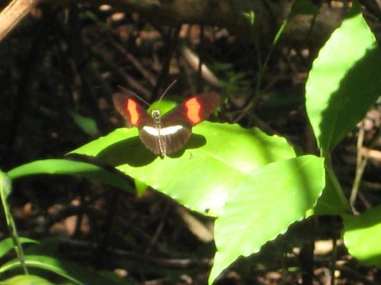 Samara Trails: A beautiful butterfly