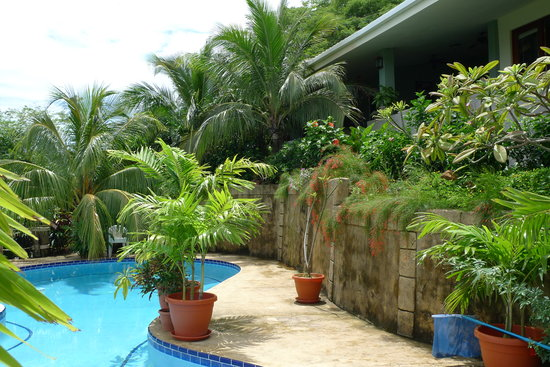 Las Palmas B&B: the pool terrace